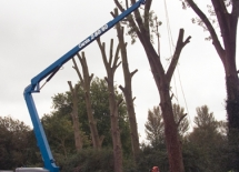Z- 8060 tree maintenance